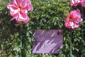 Garden Party Ideas - Giant tissue flowers and sign