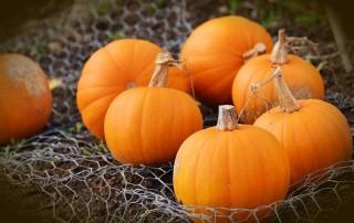 The Easiest Pumpkins EVER